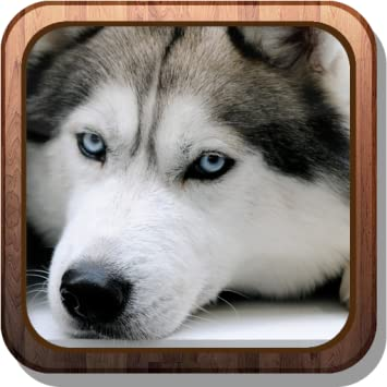 Amazon Com Siberian Husky Hd Live Wallpaper Appstore For Android