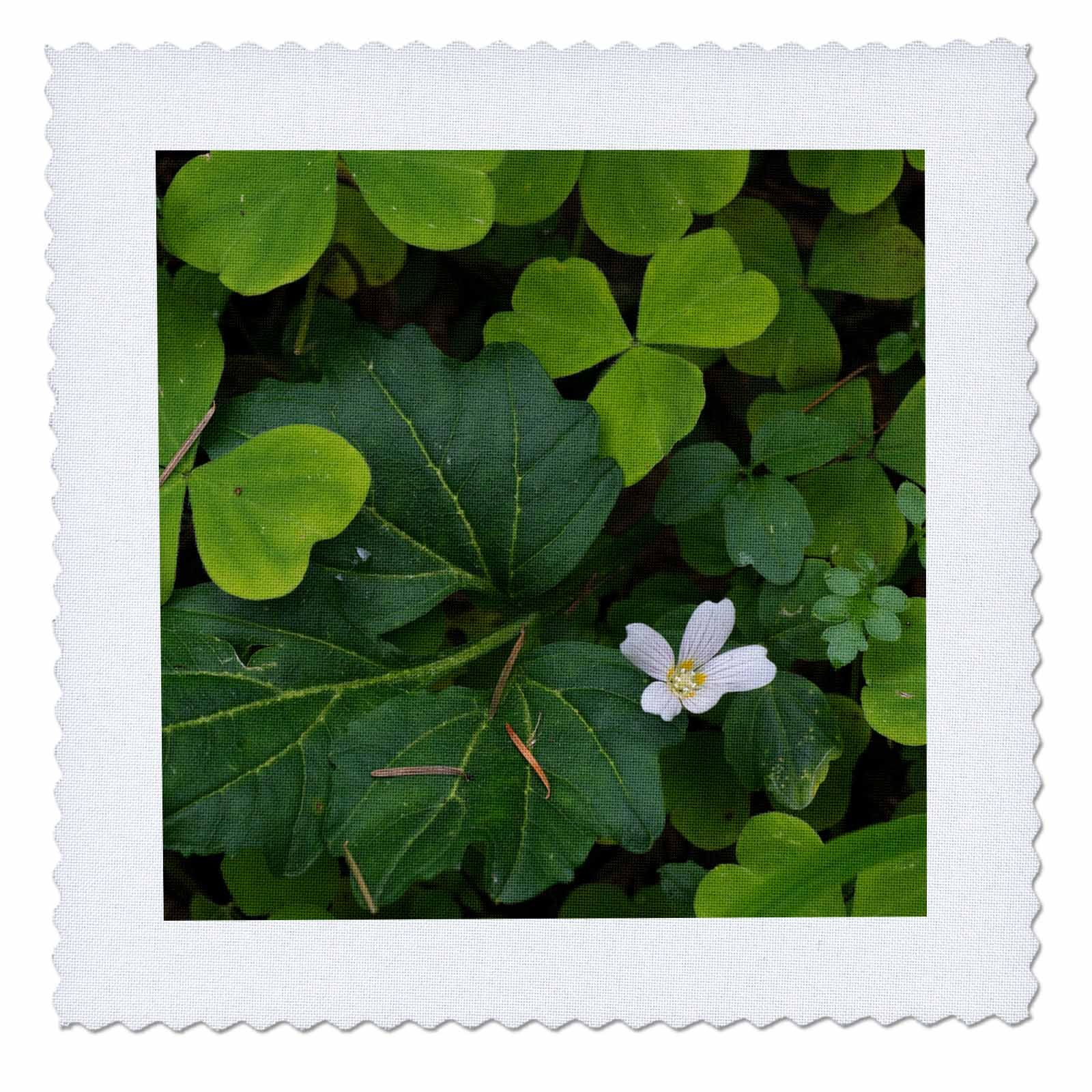 3dRose Danita Delimont - Botanical - Flowering Wood Sorrel in early spring, Silver Falls State Park, Oregon - 18x18 inch quilt square (qs_259902_7)