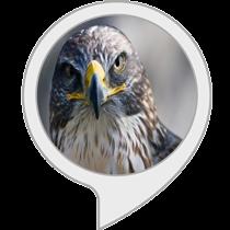 Falcon Facts