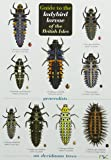 Guide to the Ladybird Larvae of the British Isles (Chart)