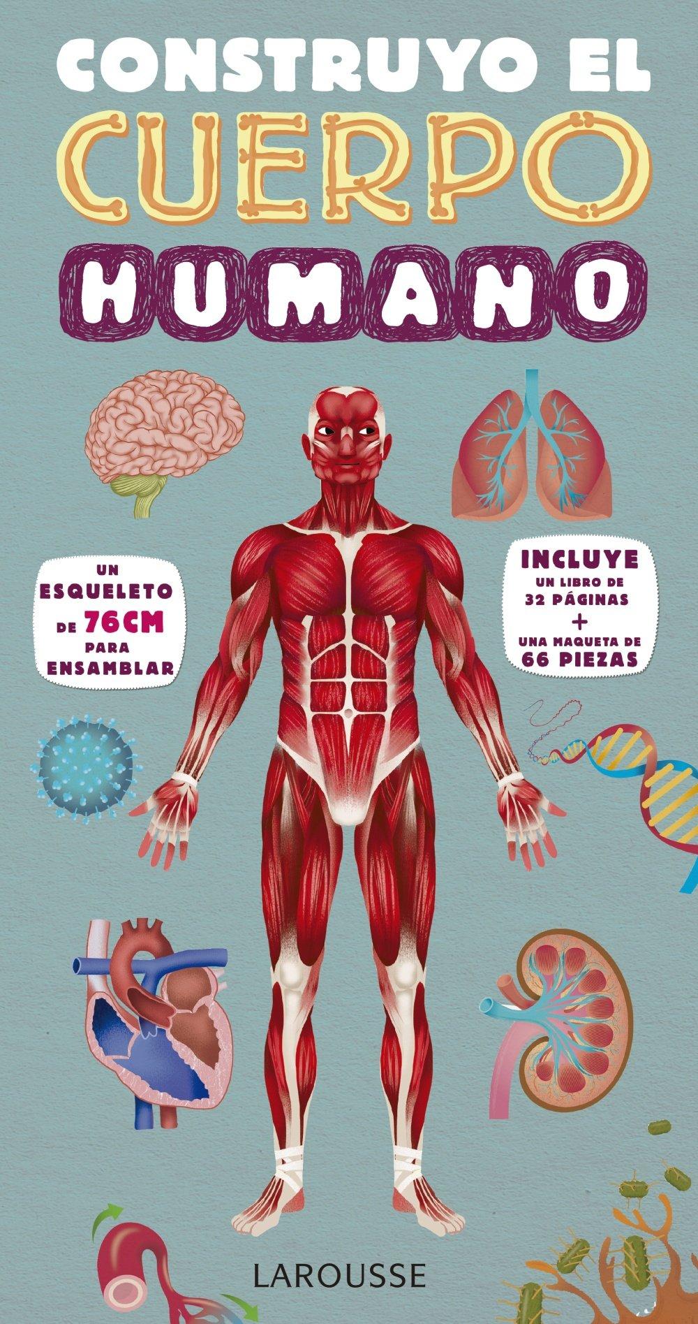 Construyo el cuerpo humano (Spanish Edition): Mark Ruffle ...