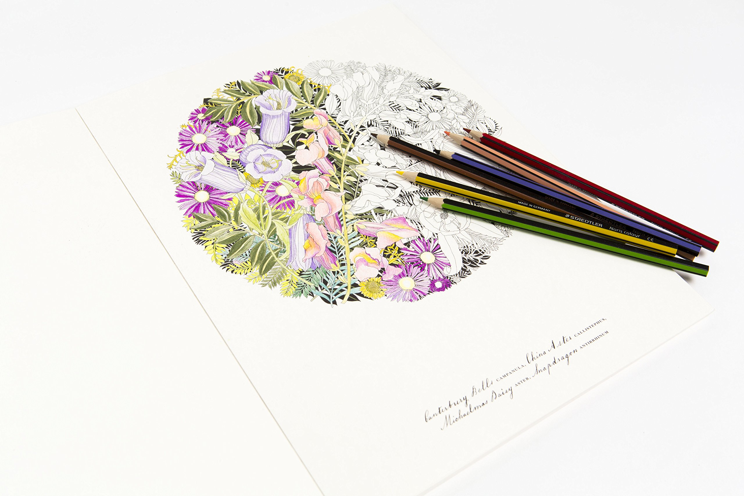 Floribunda Adult Coloring Book Filled With Floral Botanical Images To Colour