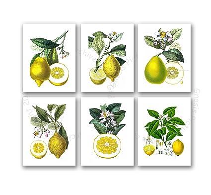 Stupendous Kitchen Decor Lemons Wall Decor Set Of 6 Unframed Yellow Lemon Citrus Fruits Botanical Art Prints For Kitchen Dining Room Interior Design Ideas Helimdqseriescom