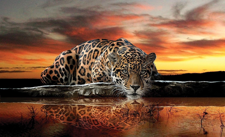 Jaguar Wallpaper Mural Amazon Com