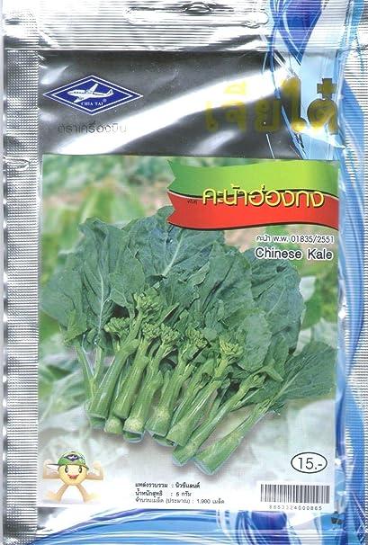 AGROBITS 3G 1100 Semillas Plan de vegetales chinos Kal tailandesa ...