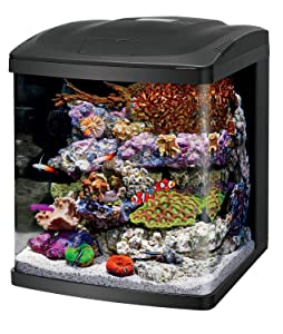 Reef hacks nano reef tank guide – our recipe for success.