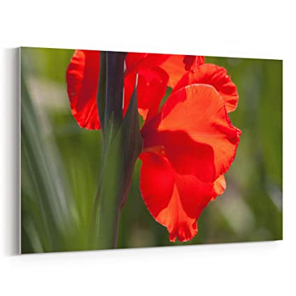 Amazon westlake art flower gladiolus 12x18 canvas print westlake art flower gladiolus 12x18 canvas print wall art canvas stretched gallery wrap mightylinksfo