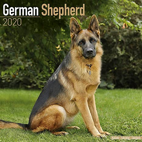 Euro 2020 Nice Calendrier.German Shepherd Calendar 2020 Dog Breed Calendar Wall Calendar 2019 2020
