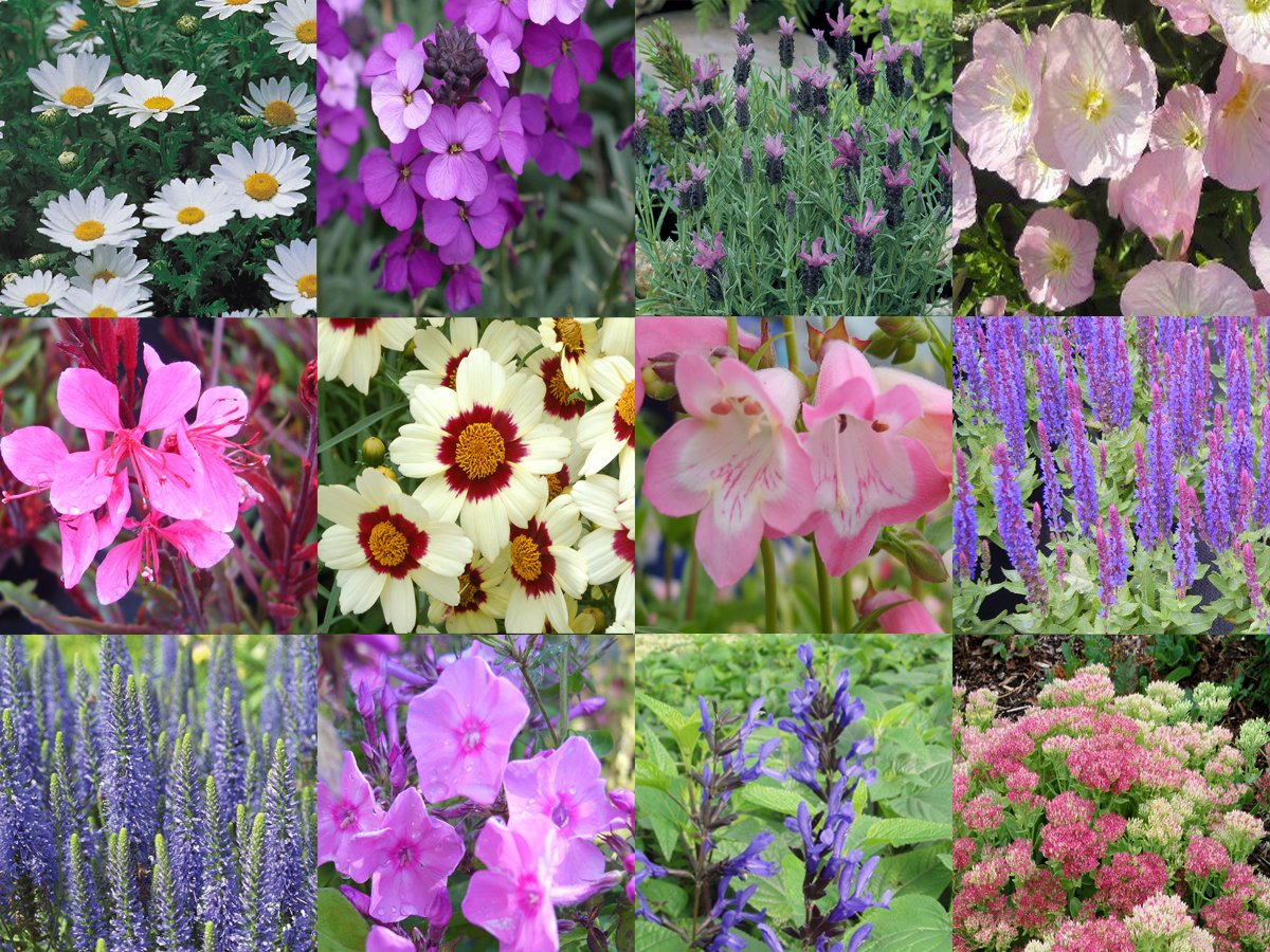 10 X Herbaceous Perennial Mixed Collection Plug Plants Amazon