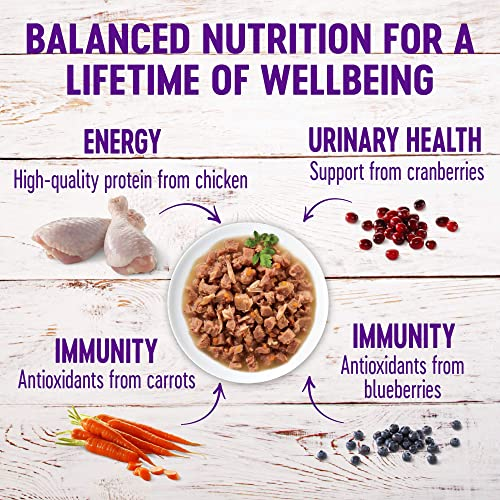 Wellness Healthy Indulgence Natural Grain Free Wet Cat Food Pouches Morsels Chicken Salmon