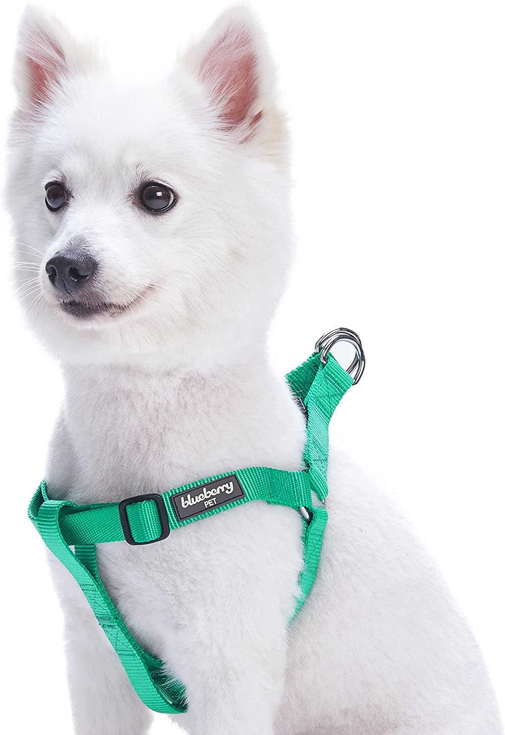 Dog wearing a step-in harness