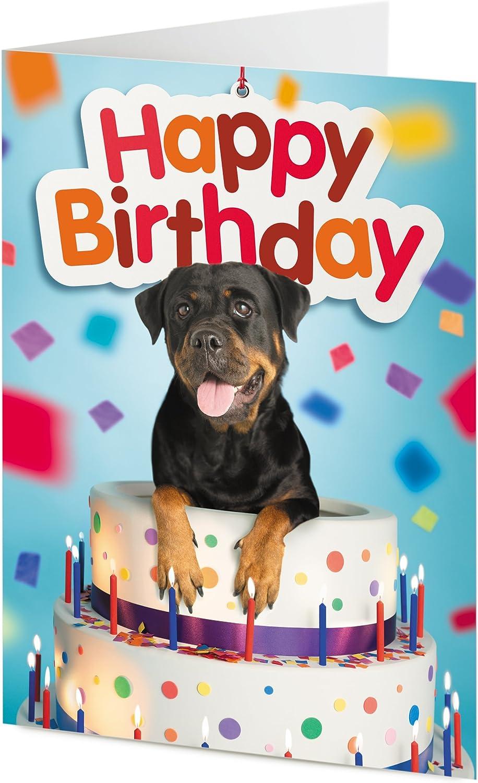 Brilliant Tigermill Publishing Rottweiler Dog Emerges From Giant Birthday Personalised Birthday Cards Xaembasilily Jamesorg