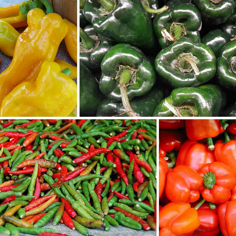 Sweet Amy Hungarian Pepper Seeds env 0.4 g Graines Heirloom