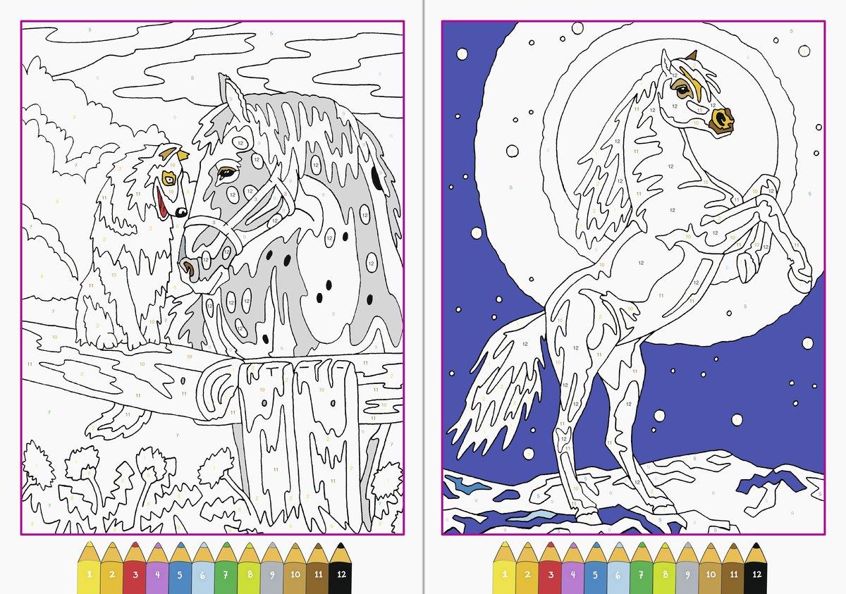 Malen Nach Zahlen Pferde Amazon De Maja Wagner Bücher