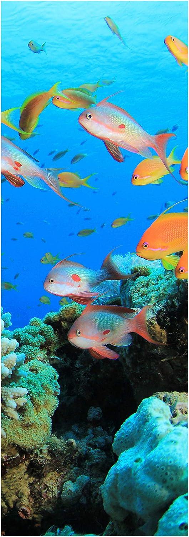 Tür-Aufkleber Türtapete Riffleben Unterwasser Tapete Wandbild M0196 Türbild