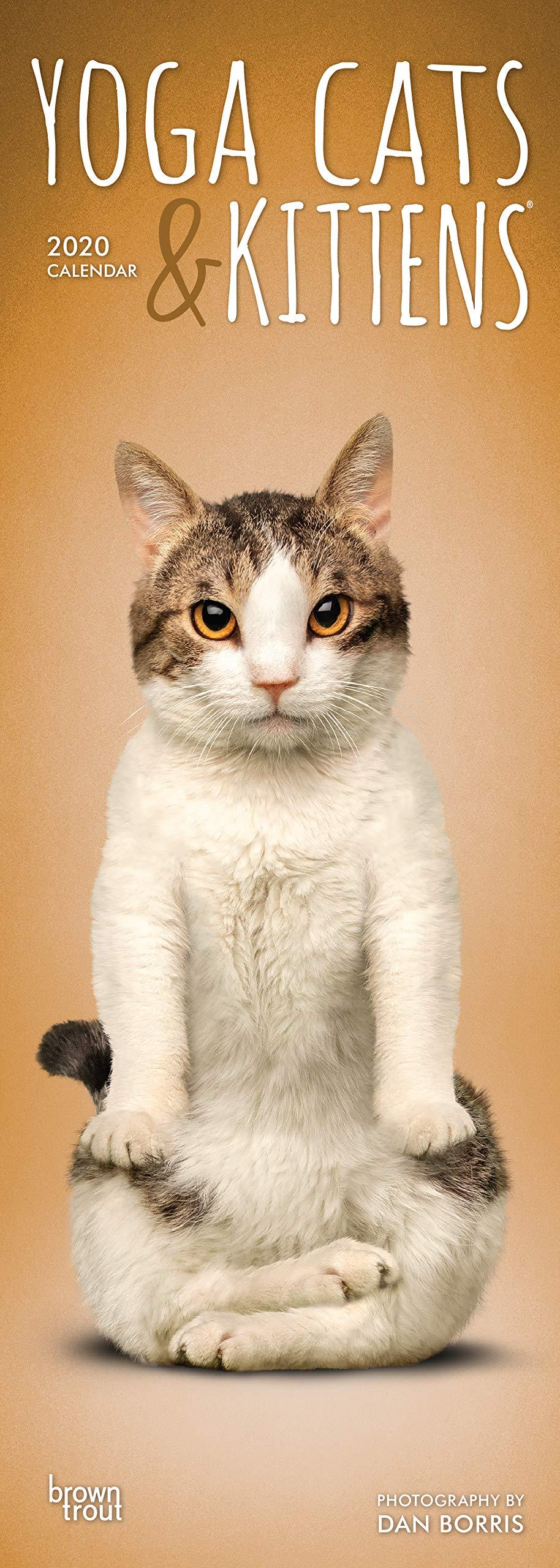 Yoga Cats & Kittens 2020 Slimline-Kalender: Original ...