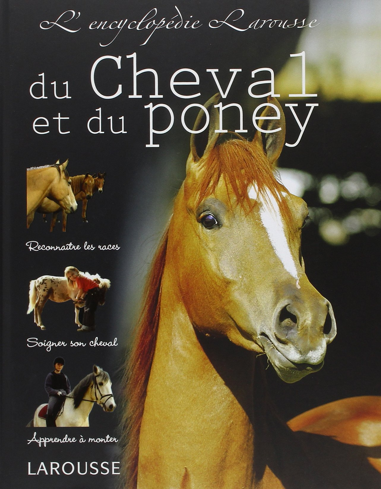 Amazon Fr L Encyclopedie Du Cheval Et Du Poney Sandy