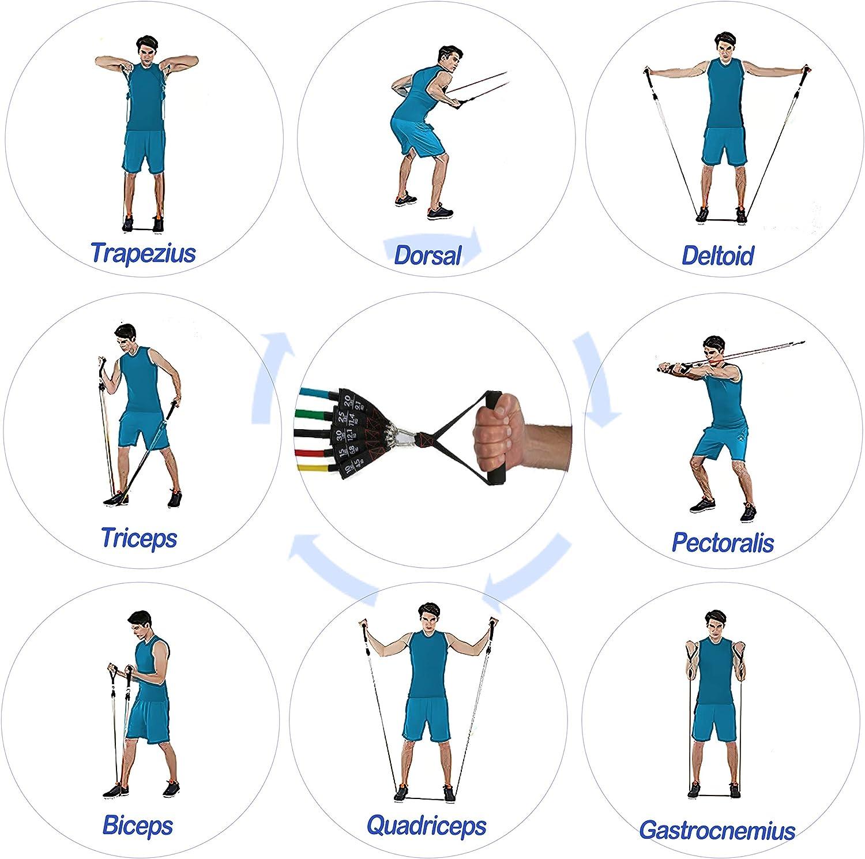 InnoTi Bandas Elásticas de Musculación y Fitness - Gomas Elásticas para Crossfit y Gimnasio en Casa - Set de Tubos de Resistencia de Latex - Asas y ...