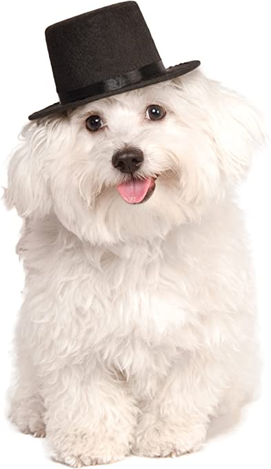 Amazon Com Rubie S Top Hat For Your Pet Small Medium Pet Supplies