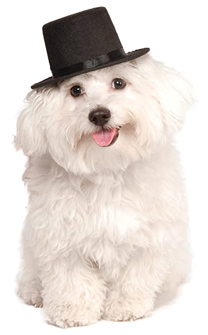 1282ae3b0ea Amazon.com   Rubie s Top Hat for Your Pet