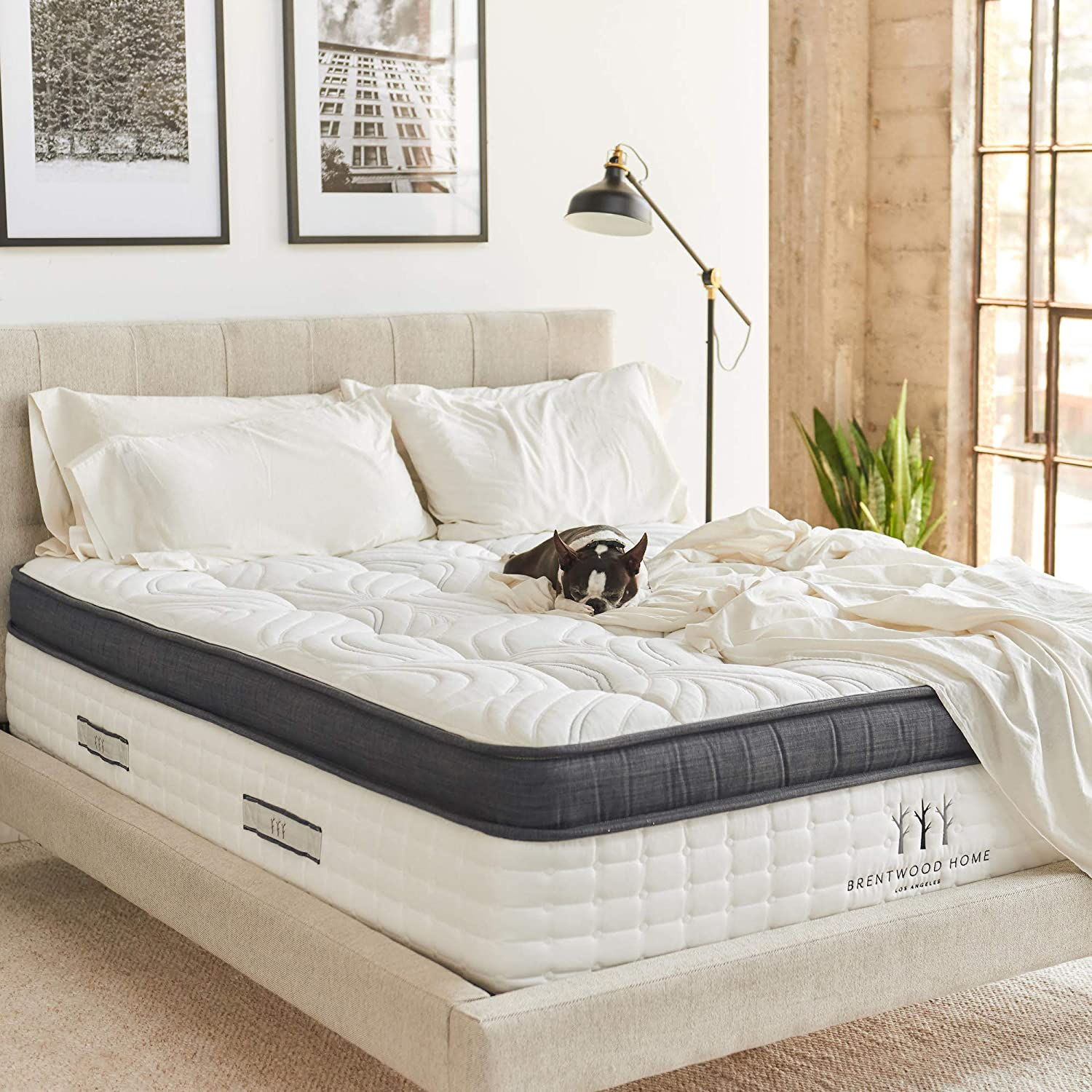 Brentwood Home Oceano Wrapped Innerspring Mattress, Made in California, Queen