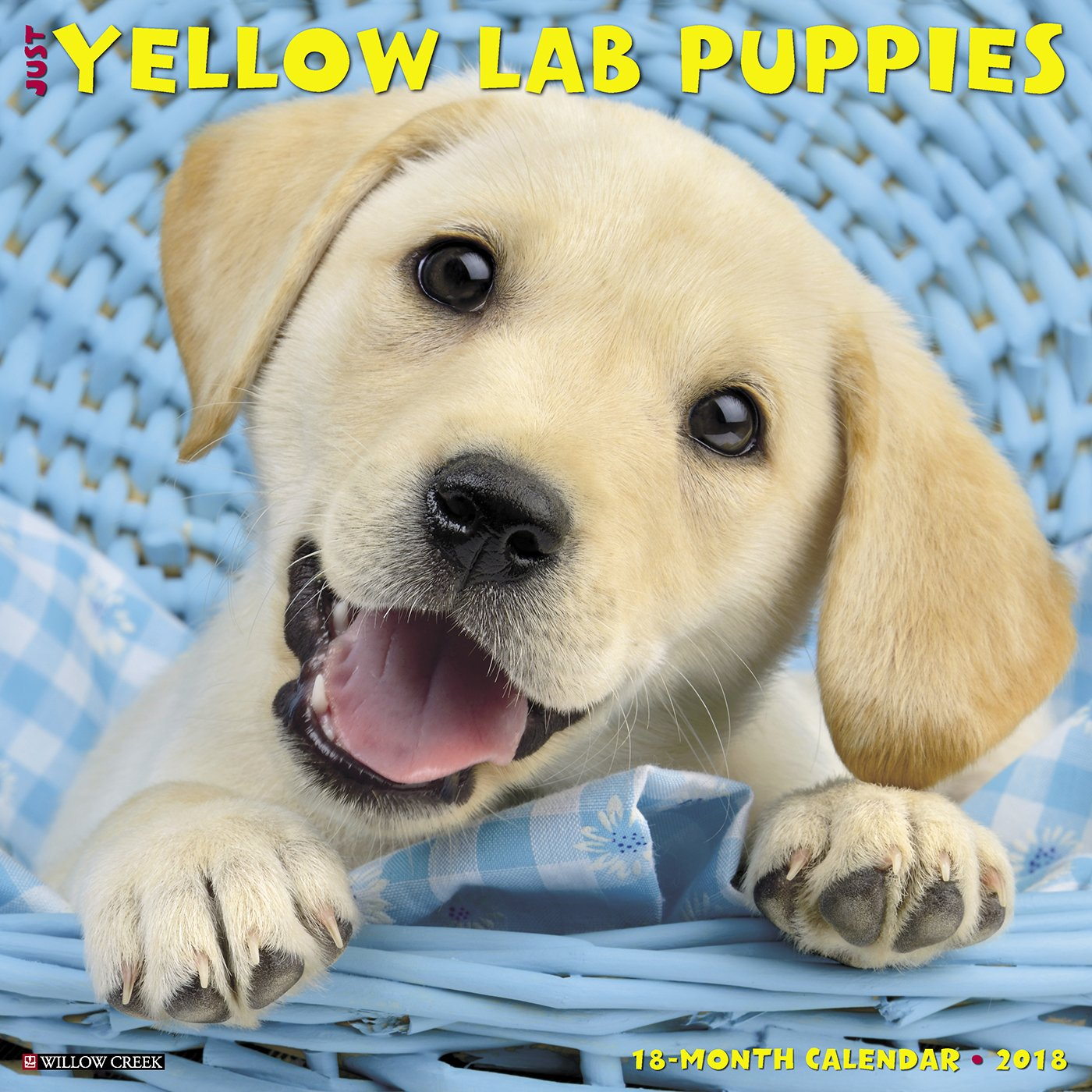 Just Yellow Lab Puppies 2018 Calendar Willow Creek Press