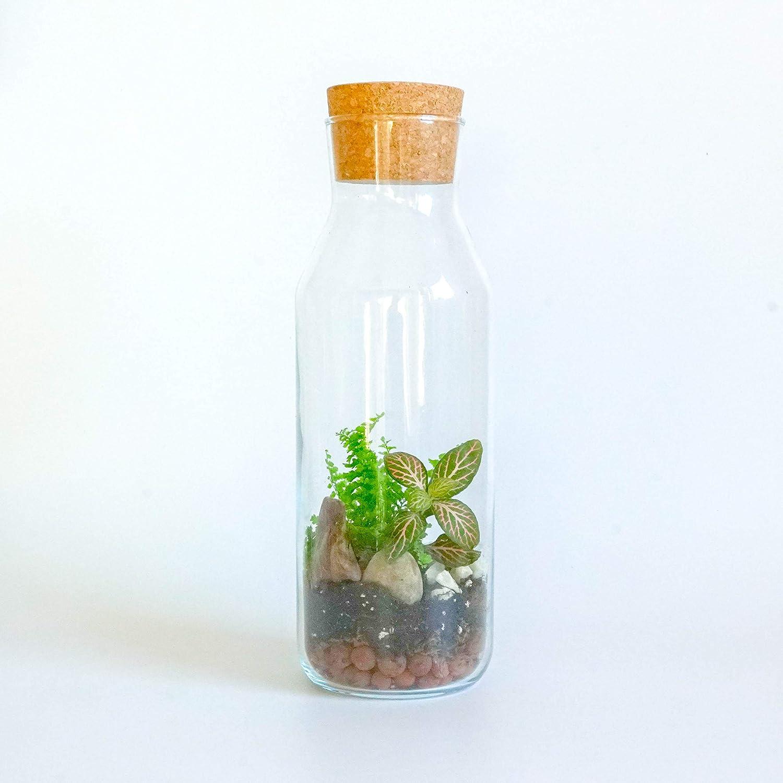 Terrario Kit con recipiente de vidrio y corcho tapa DIY Kit Mini jard/ín Idea de regalo
