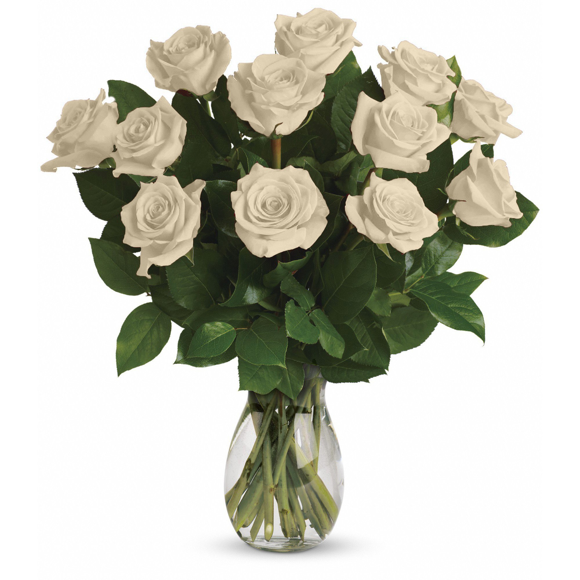Farm Direct Rose Bouquet of 12 Fresh Cut Roses with Vase (White)