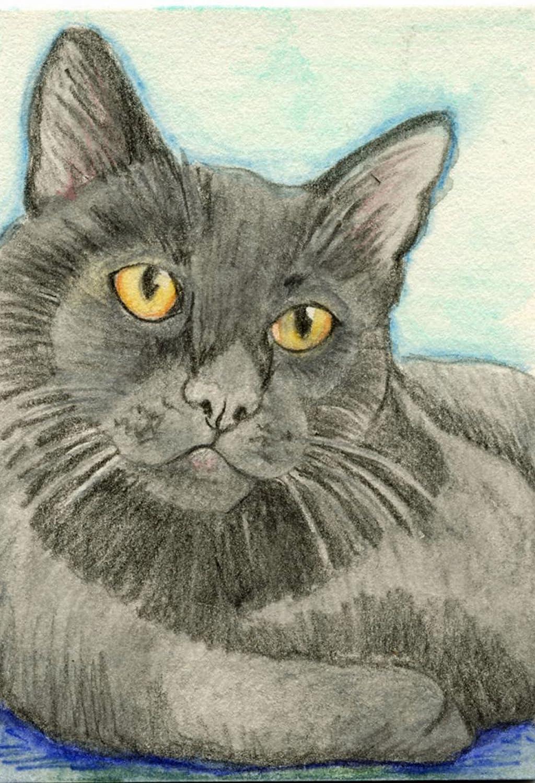 Amazon com aceo atc black kitty cat pet watercolor pencil art