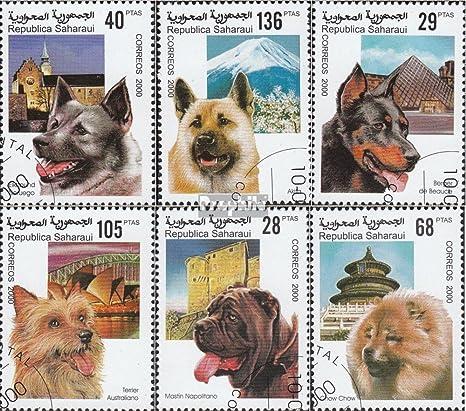 Sáhara Edición El Gobierno En El Exilio Sin Validez En Internacional Animal Kingdom El Tráfico