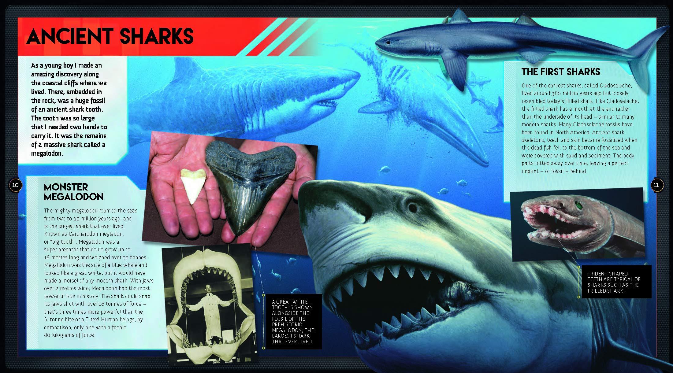 Sharks: Get Up Close to Nature's Fiercest Predators: Ben