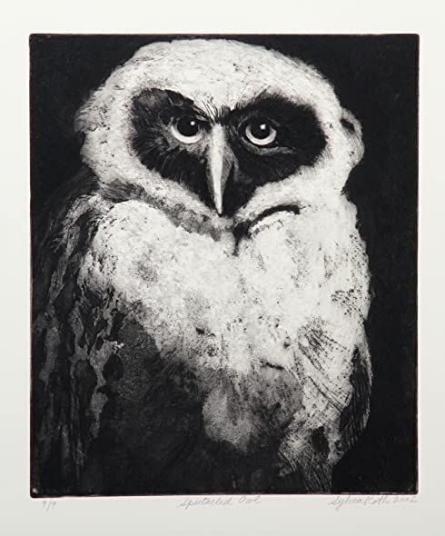 Amazon.com: Spectacled Owl: Sylvia Roth: Fine Art