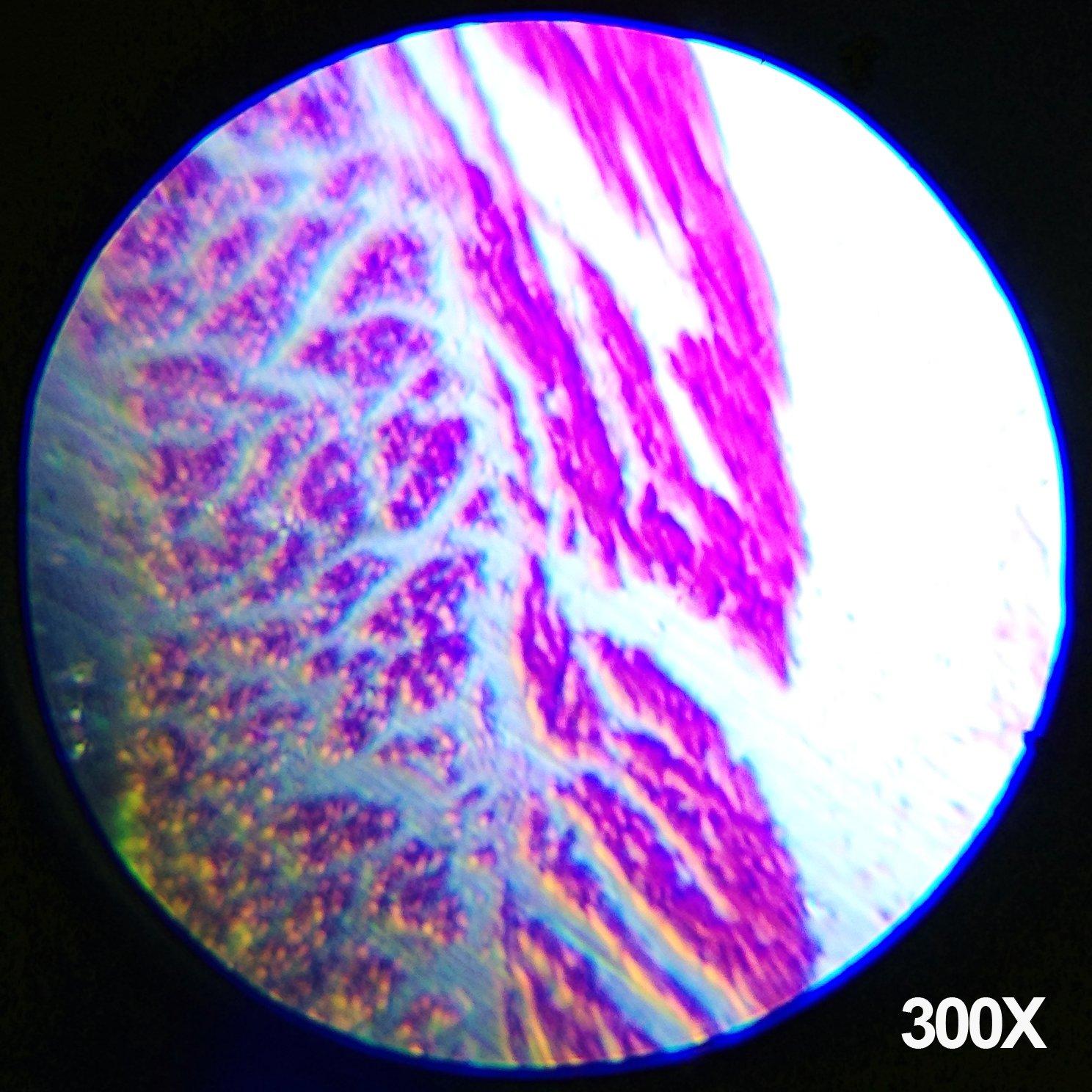 AmScope-Kids M30-ABS-KT1-W-I 120X-240X-300X-480X-600X-1200X 48pc Metal Arm & Base Educational Kids Biological Microscope Kit by AmScope (Image #5)