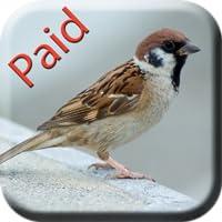 Bird Sounds Paid