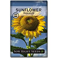 Sow Right Seeds - Mammoth Sunflower Seeds to Plant and Grow Giant Sunflowers in Your Garden; Non-GMO Heirloom Seeds; Full Instructions for Planting; Wonderful Gardening Gifts (1).