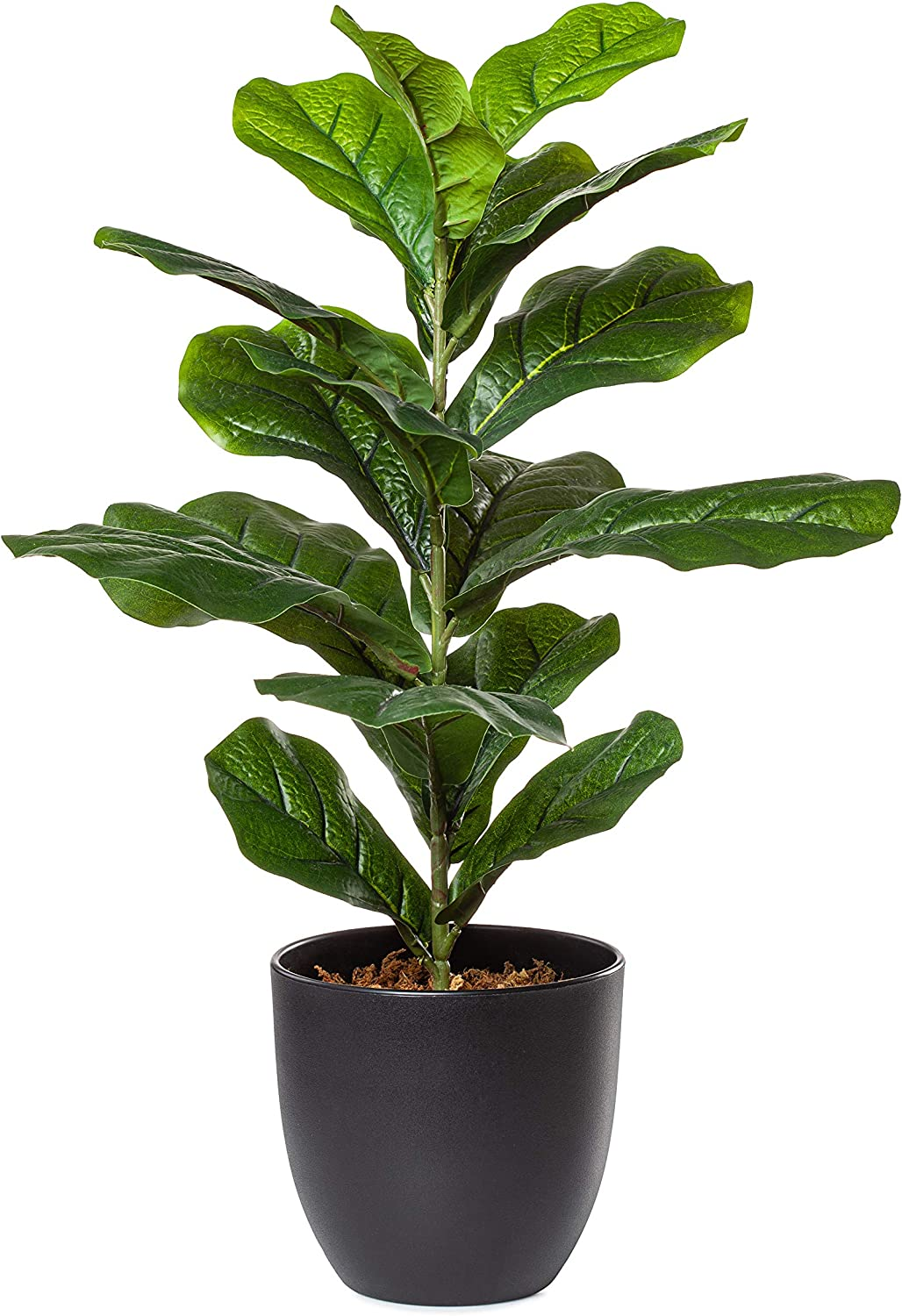 PLANTAE Artificial Fiddle Leaf Fig Tree Faux Realistic 22