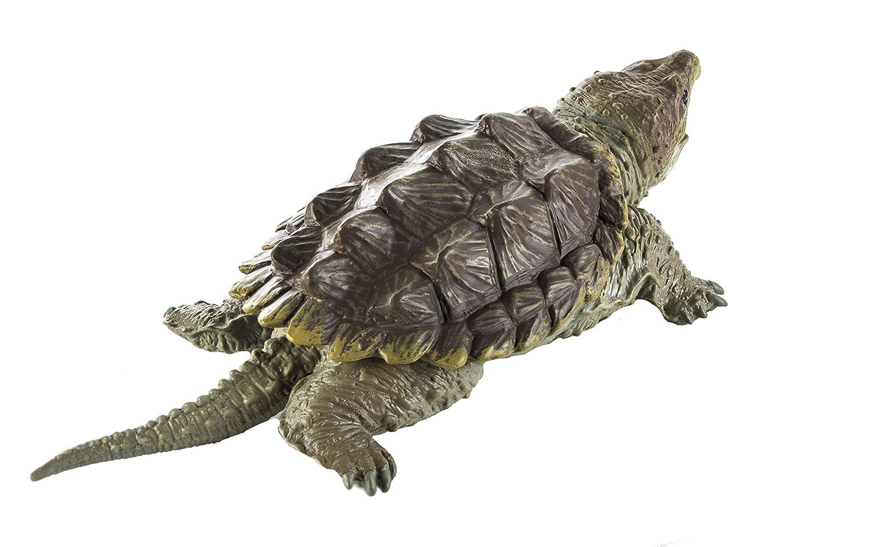 Warning turtles amp tortoises inc - Warning Turtles Amp Tortoises Inc 20