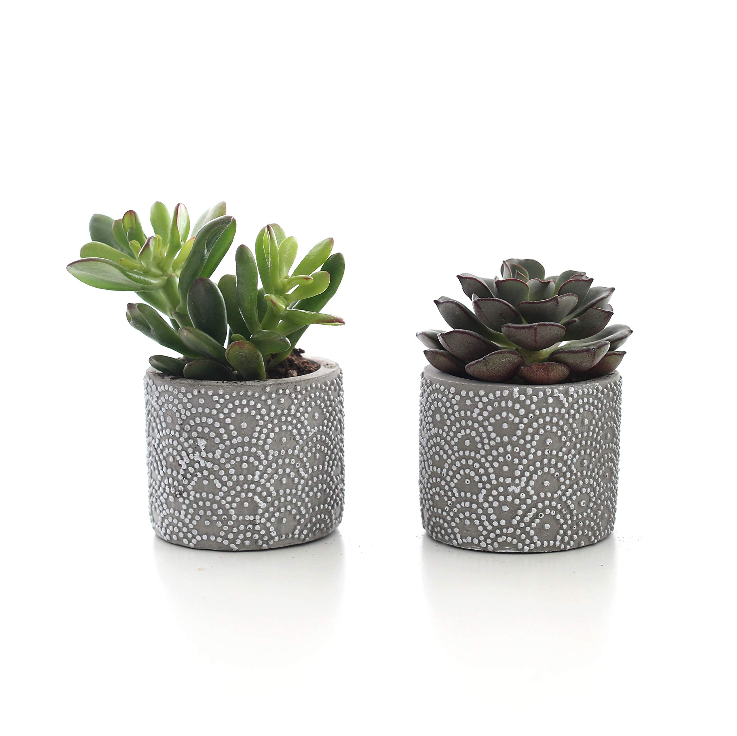 Plants by Post 2.5'' Mini Live Succulent in Grey Wave Pattern Ceramic Pot (Set of 2), 3'',