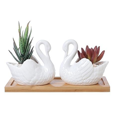 Amazon.com : Set of 2 White Ceramic 4-Inch Swan Succulent Planters on swan rugs, swan animals, swan statuary, swan toys, swan tea set, swan wall decals, swan paintings, swan jewelry, swan weathervanes, swan figurines, swan balloons, swan fruit, swan prints, swan cookware, swan cups, swan flowers, swan serveware, swan boxes, swan glass, swan cookies,