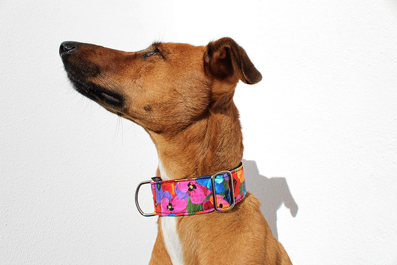 candyPet Collar Click para Perros - Modelo Flores: Amazon.es ...