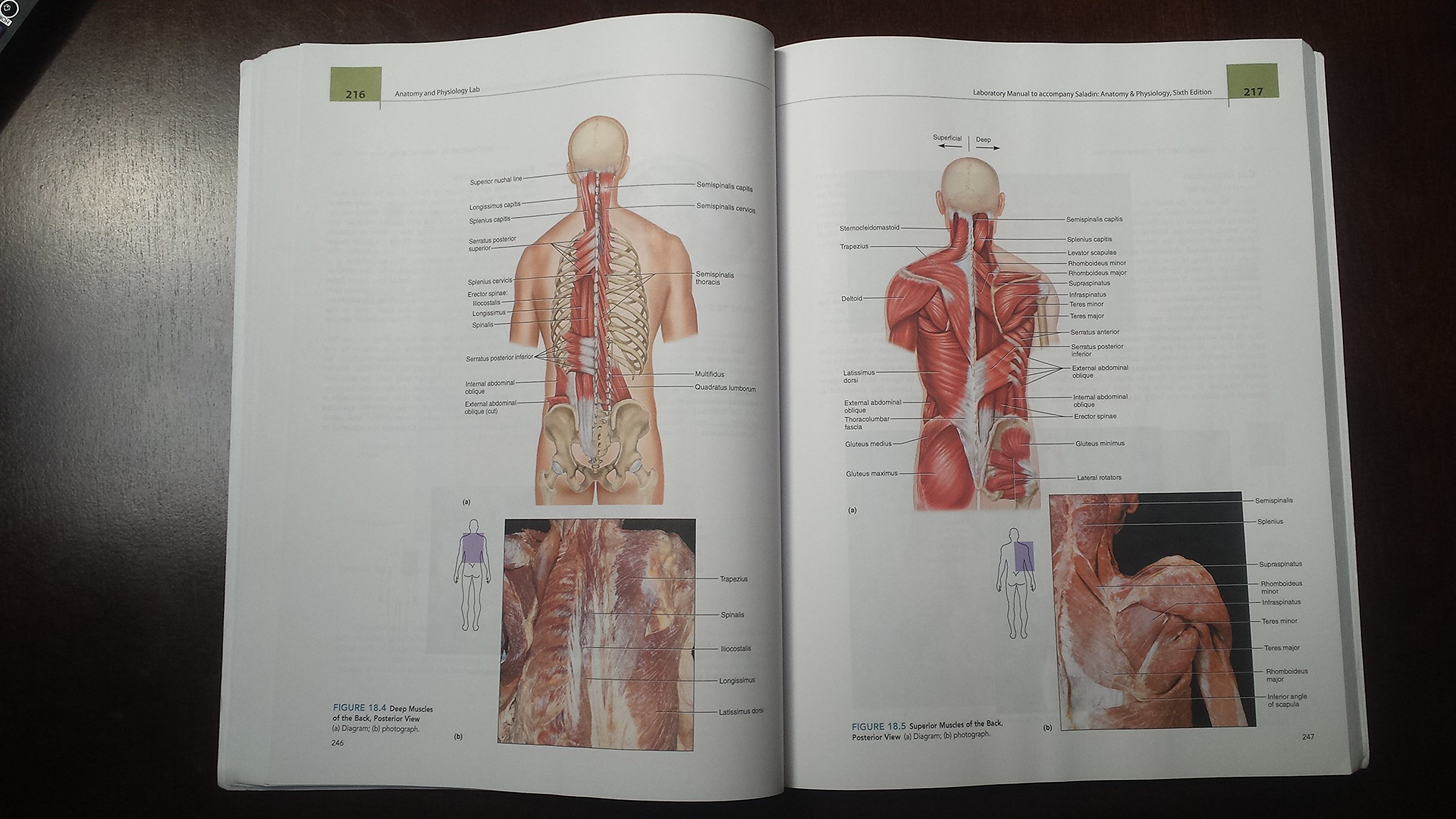 Anatomy and Physiology Lab Bio 201/202: Northern Arizona University ...