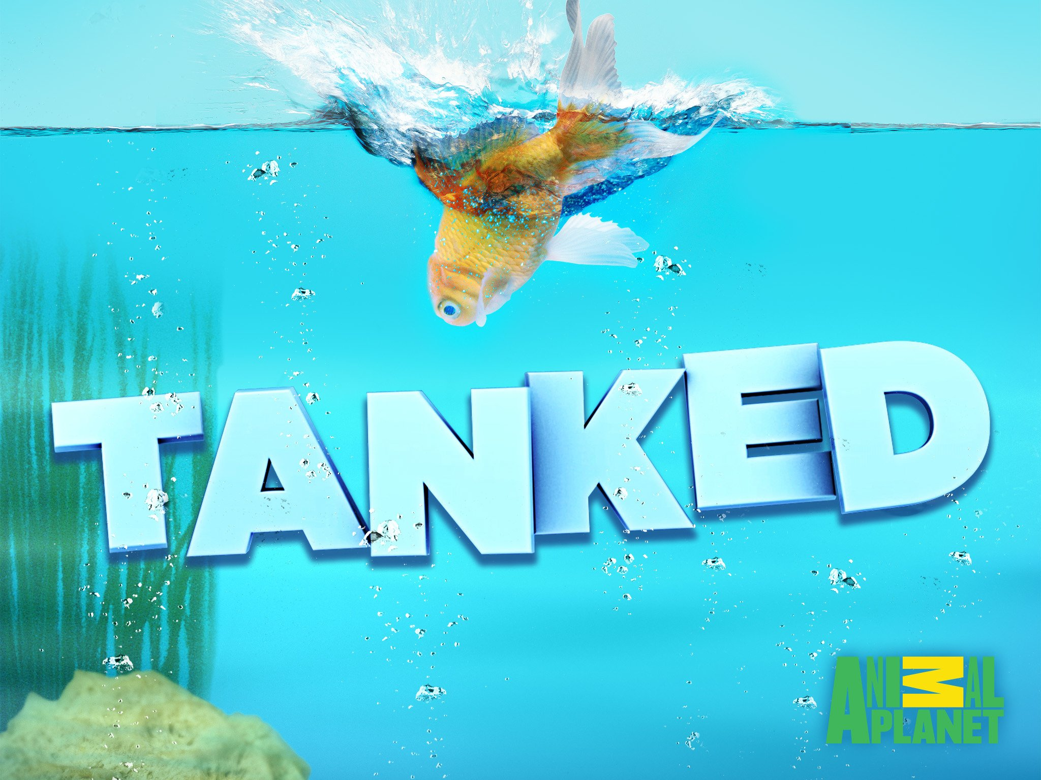 watch tanked season 12 online free