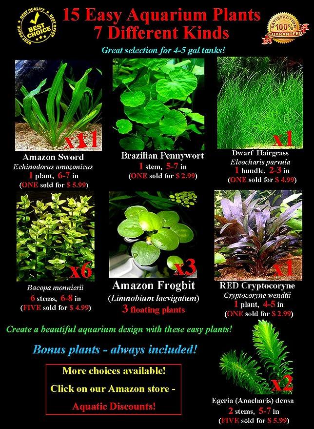 15 Plantas de Acuario vivas/7 Tipos Diferentes - Espada de Amazon, césped Enano y Mucho más. Gran muestrario de Plantas para 5 - 10 galones. Tanques!: