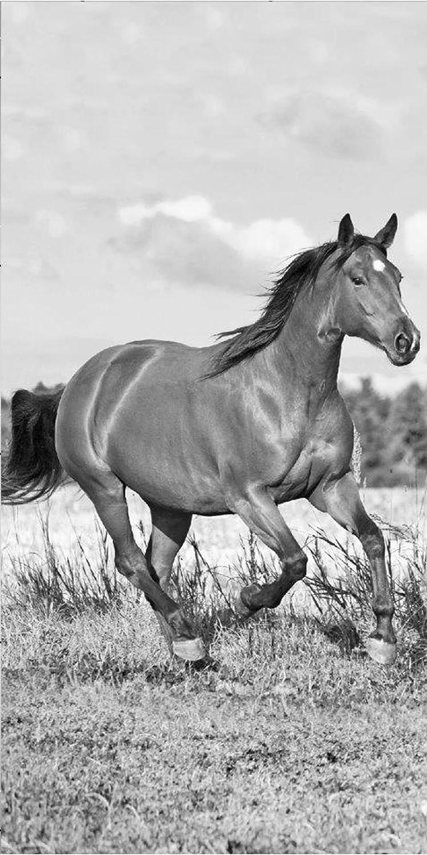 Horse Riding Cavalli Telo Mare 70/x 140/cm Bianco e Nero