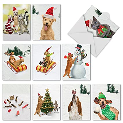 Amazon funny assortment of 10 holiday cards with envelopes 4 funny assortment of 10 holiday cards with envelopes 4quot x 525quot m4hsunfo