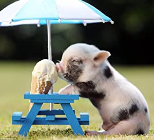 Adult Puzzle Classic Jigsaw Puzzle 1000 Piece Children Elderly Puzzle DIY Teacup Pig with Icecream Wooden Puzzle Modern Home Decor Festival Gift Wall Art 75x50cm