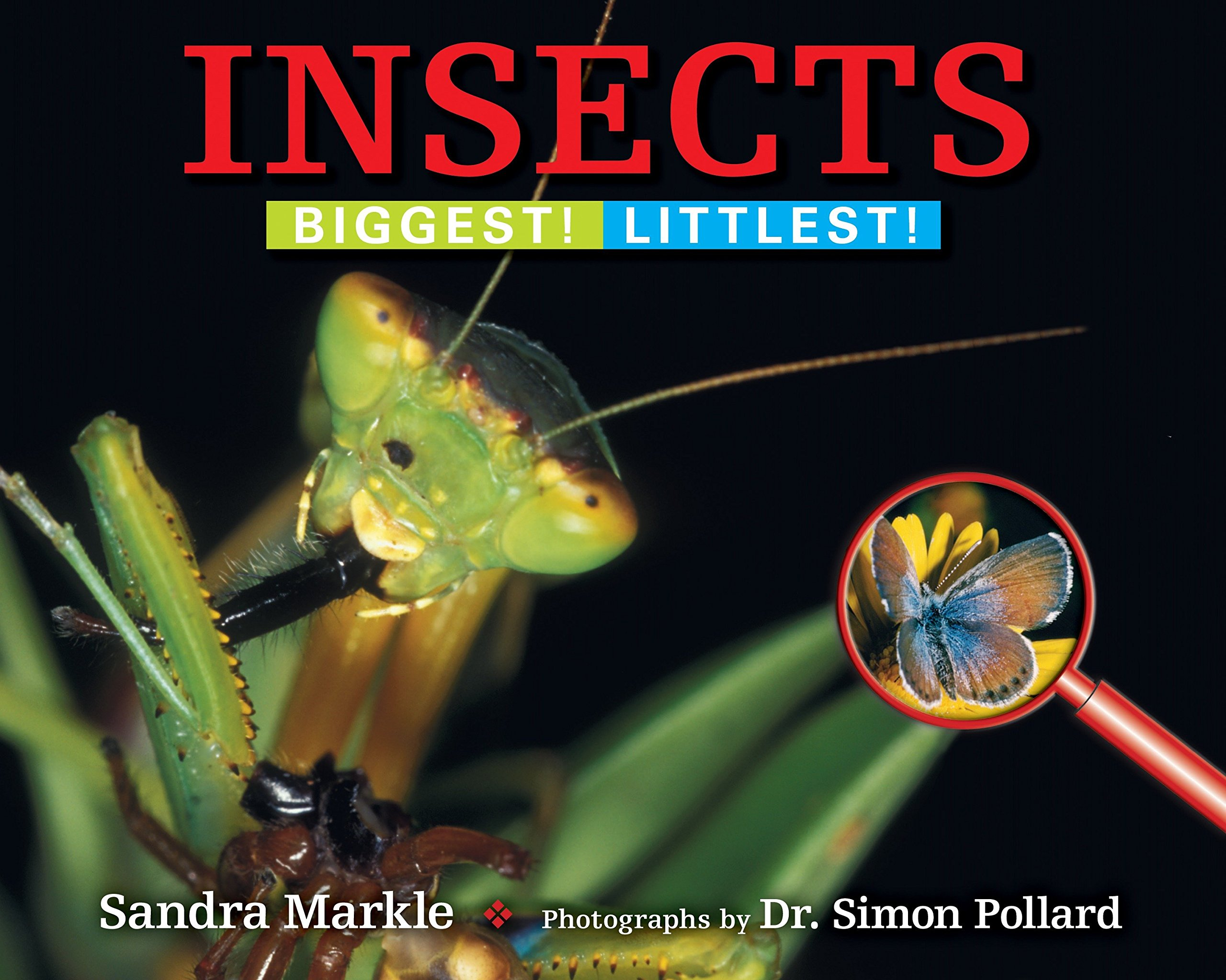 Insects: Biggest! Littlest!