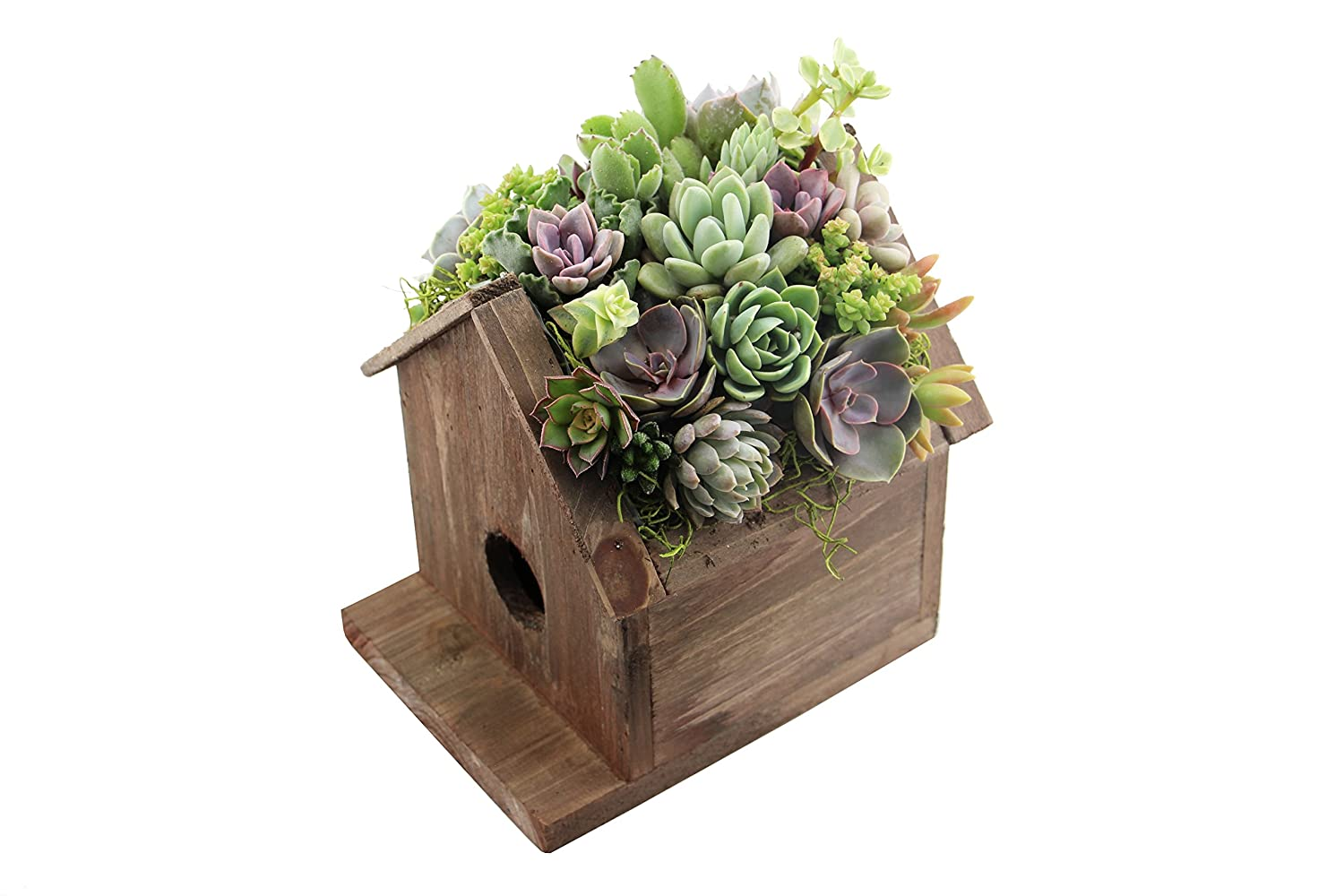 Bird House Succulent Planter