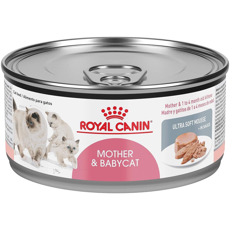 Amazon.com: Royal canin Nutrición saludable felina ...