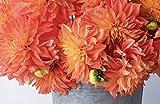 Dahlias: Beautiful Varieties for Home & Garden
